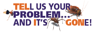 Teligon Pest - Tell us your problem and it's gone!